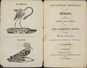 bird-title