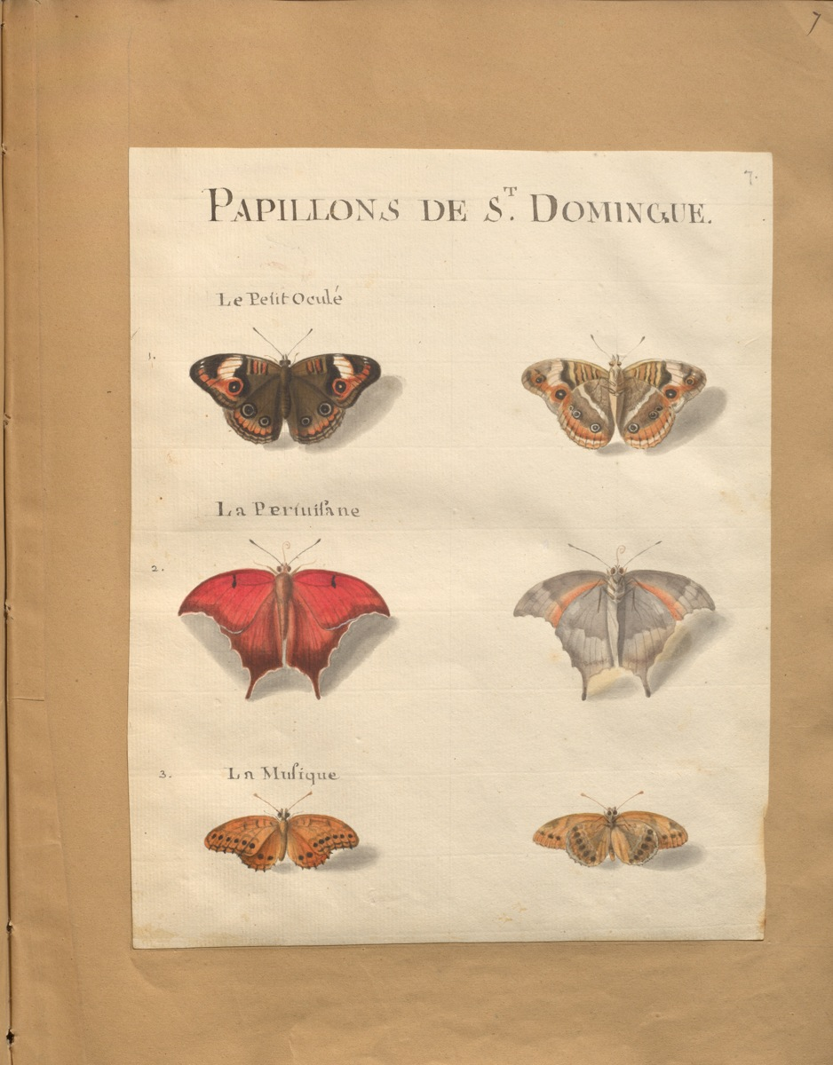 Original water-colour paintings on the natural history of St. Domingo : with mo. notes. (1766) de Rabié. McGill Library. Rare Books and Special Collections. Blacker-Wood Illustrations. folio M9725 R11 cutter V.4 (FRUITS).