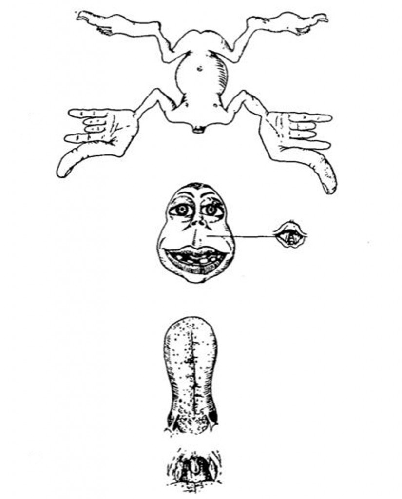 PenfieldHomunculus