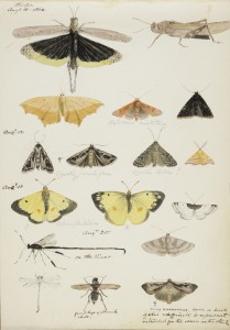 Coloured sketches by W. A. Johnson. William Arthur Johnson Fonds, P139, Osler Library
