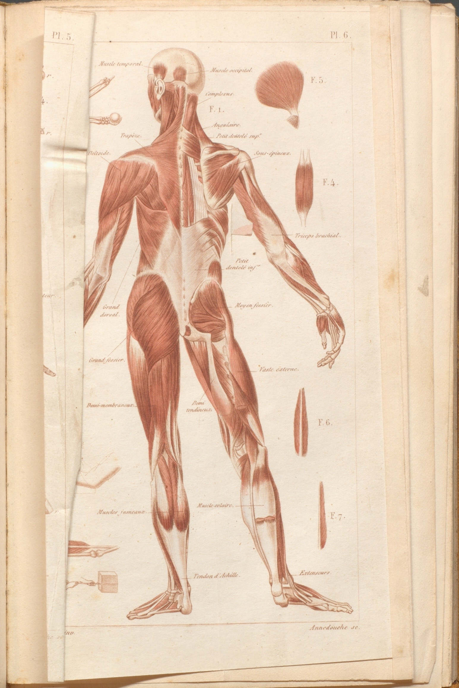 anatomical atlas | De re medica