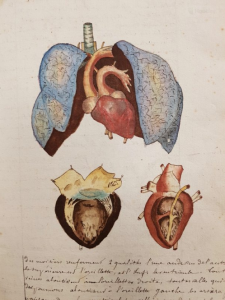Using watercolour to reveal the heart and lungs. Page 9 in Cahier d'histoire naturelle (1835-1837) : à Moulins
