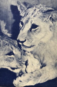 David and Bess. Photo by Miss Claire Vanier, found in the Society's journal The Lynx (Vol. 1, No. 4 Summer 1967).