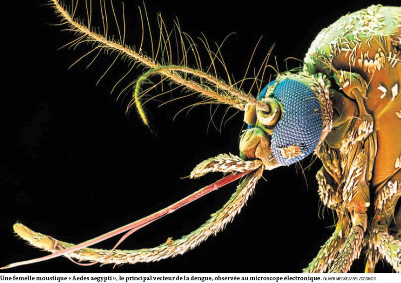 dengue mosquito bite